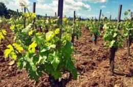 RFID per la tracciabilità del vino Collemassari