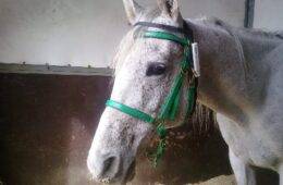 Race Timing RFID – Case History Endurance Equestre